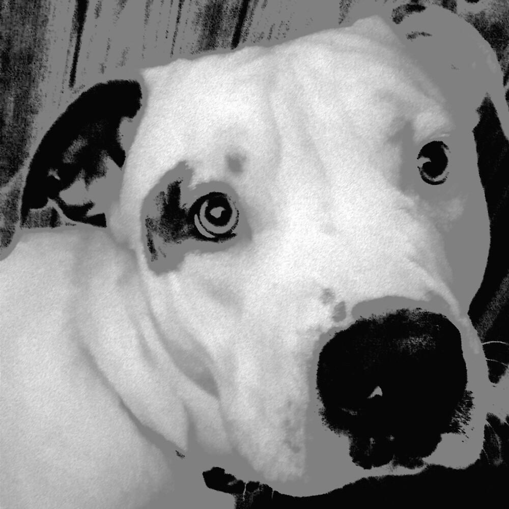 Dog Photo by TJHughes123