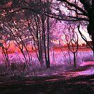 Fairy Paths by Paula Bielnicka