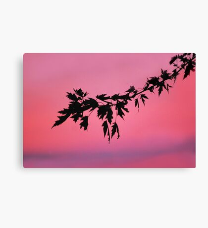 Warm Summer's Evening Canvas Print