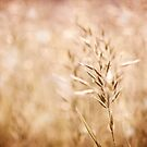 Sepia toned cereal grass inflorescence by Arletta Cwalina