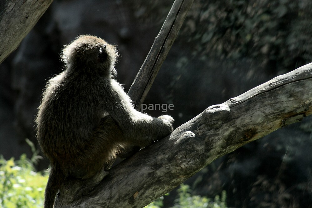 Contemplation by pange