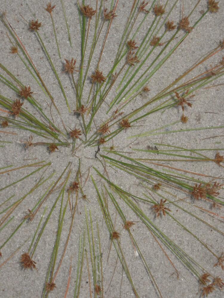 kladescope by spiritedwings