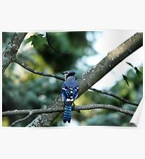 Singing The Blues - Blue Jay Poster