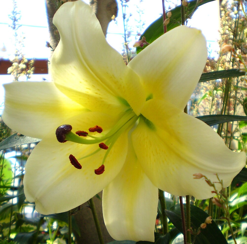 A yellow lily! by Mary  Hazelton
