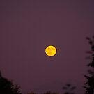Orange Moon At Dusk by Kat Miller