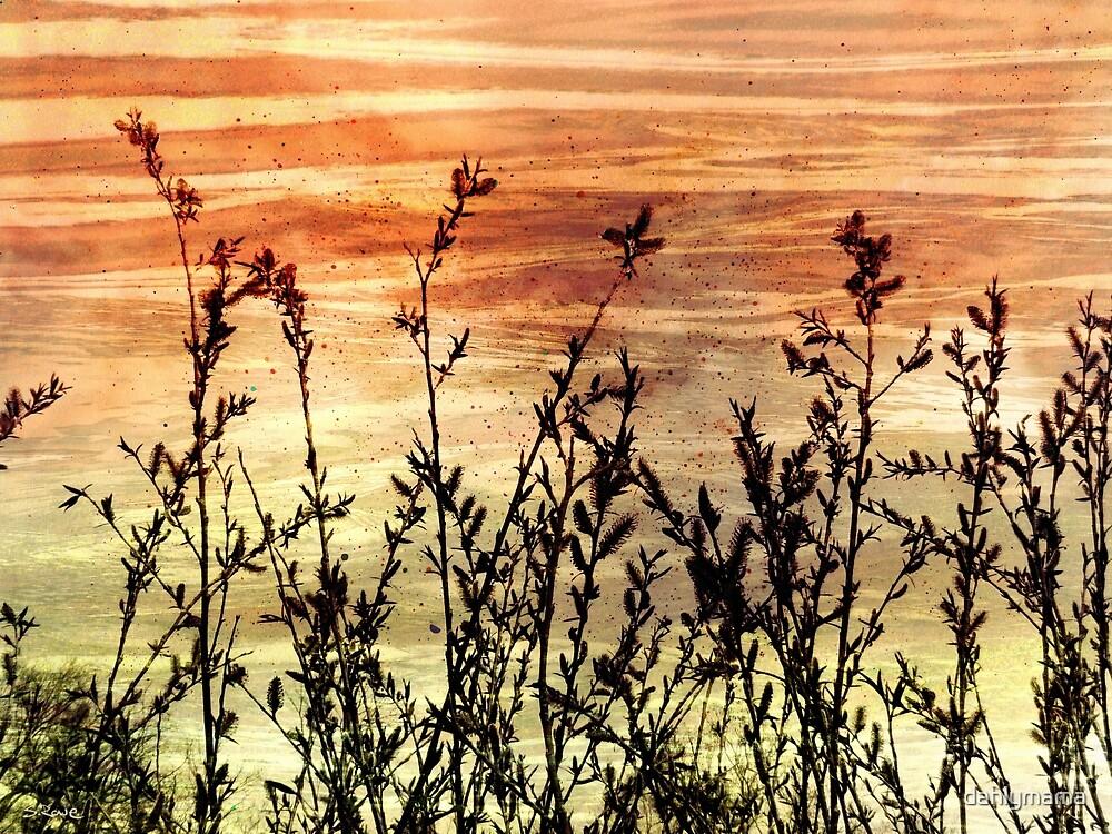 Wildflower Sunrise by Shawna Rowe