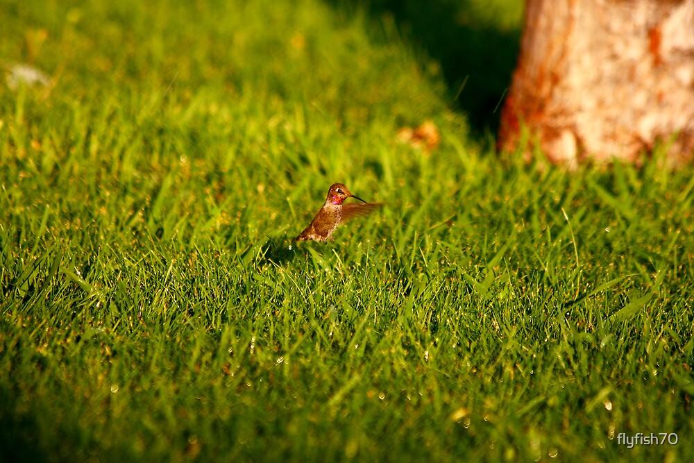 Grass Ballet  by flyfish70