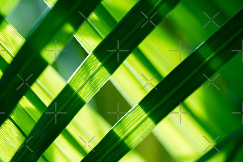 Woven Palm Leaves by heidiannemorris