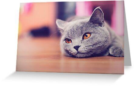 Pretty Cat with Amber eyes by DV-LTD