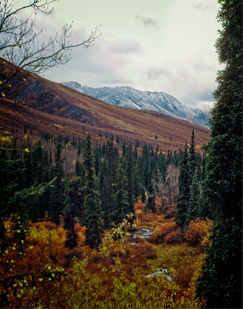 Fall Colours on the Dempster by Yukondick