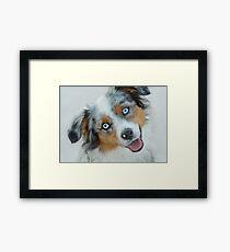 Blue-Eyed Dog Framed Print