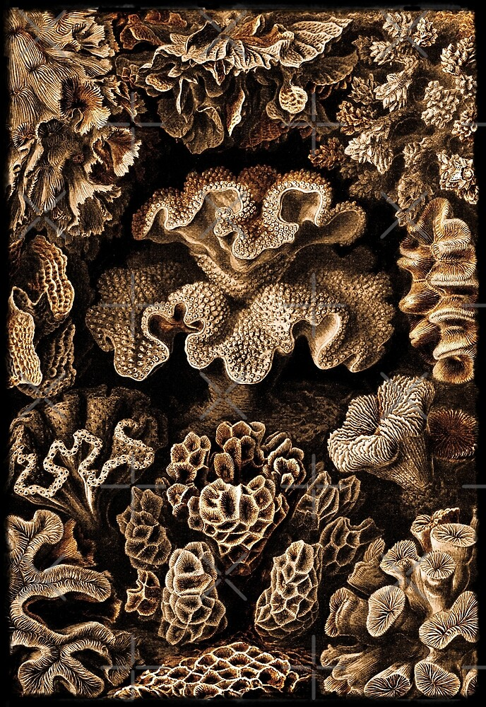 Image of Fungi and Sponges by diane  addis
