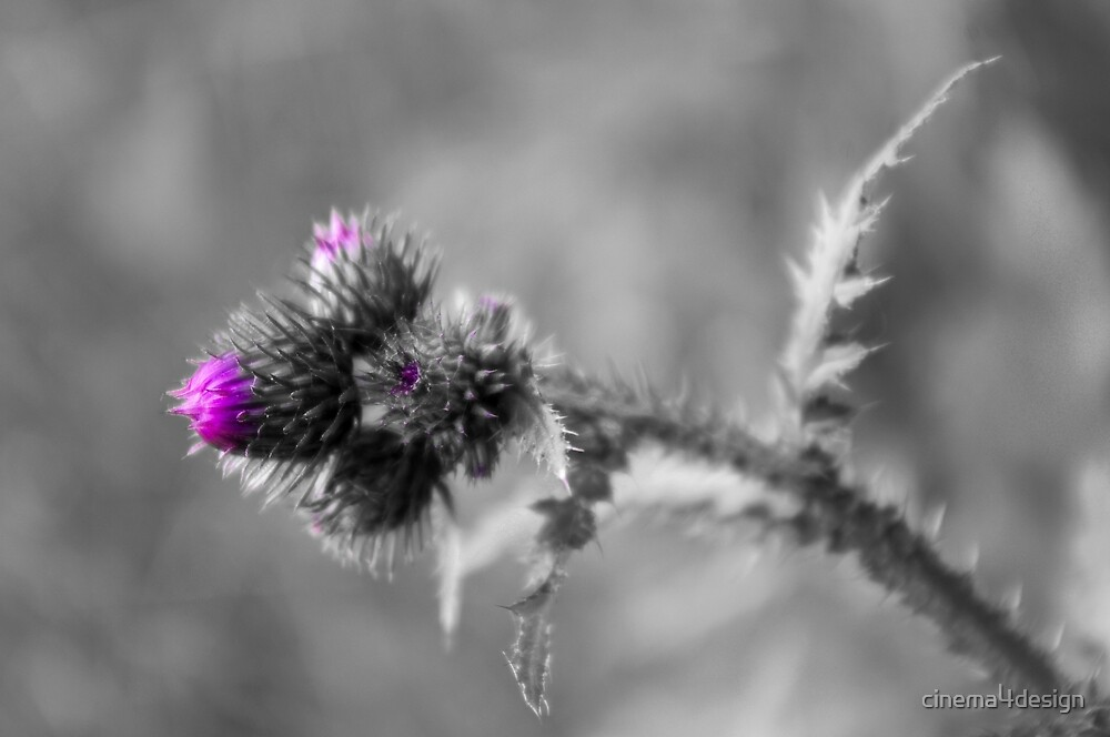 Thistle by cinema4design
