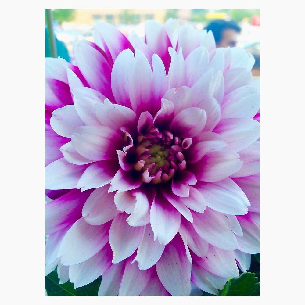 Flower by mwilliams9798