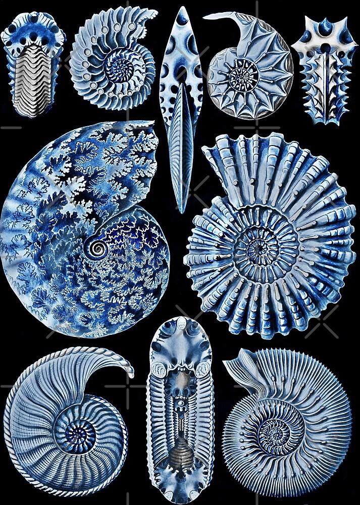 Blue Shells by diane  addis