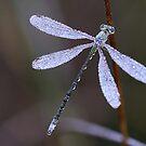 Jewel of Nature by Jo Nijenhuis