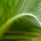 Palm Leaf by heidiannemorris