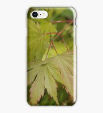 Acer palmatum iPhone Case/Skin