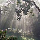 Eltham mist. by straylight