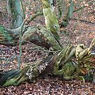 One-winged fallen tree by Gili Orr