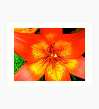 Orange Lily - all products Art Print