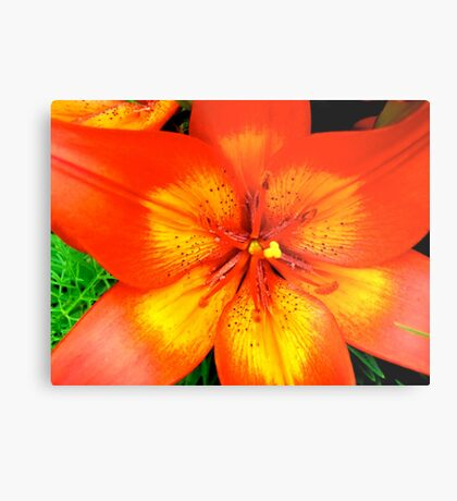 Orange Lily - all products Metal Print