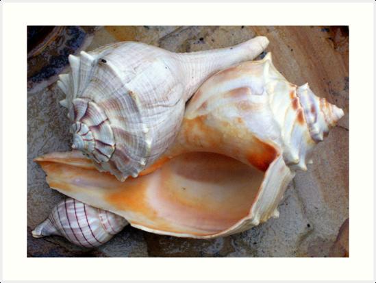 Full View Sea Shells by CynLynn