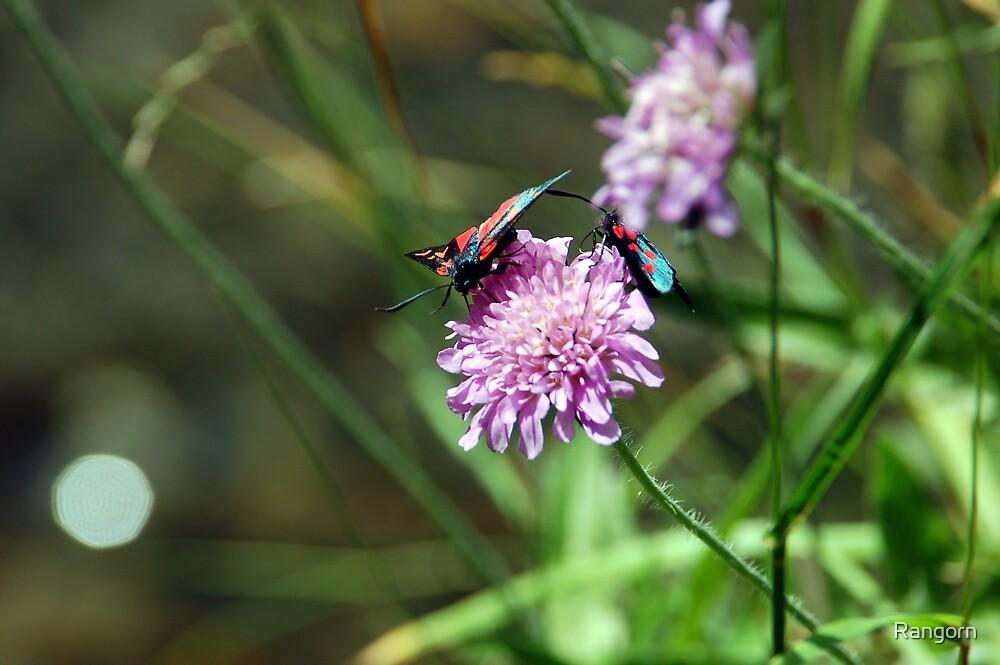 butterfly 2 by Rangorn