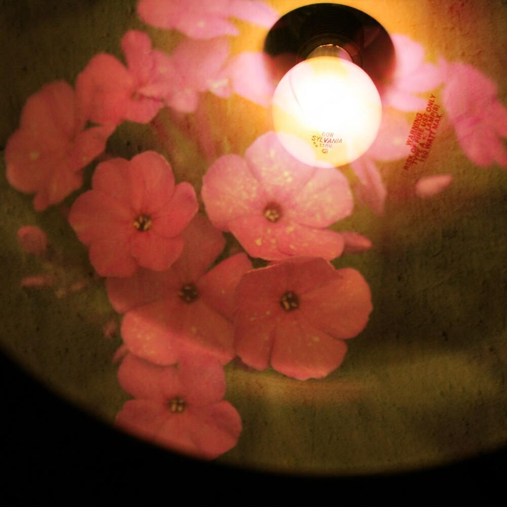 petals of light by Morgan Kendall