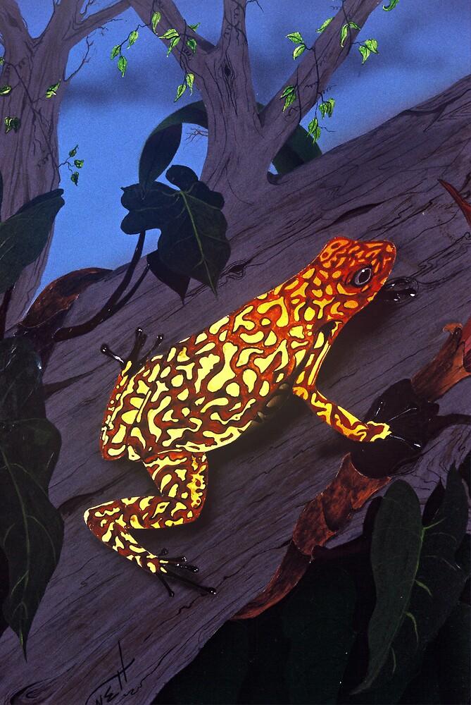 Orange tree Frog by Fredrick Bennett