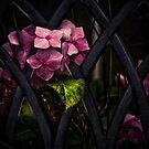 Pink lattice 1 by Rose Atkinson