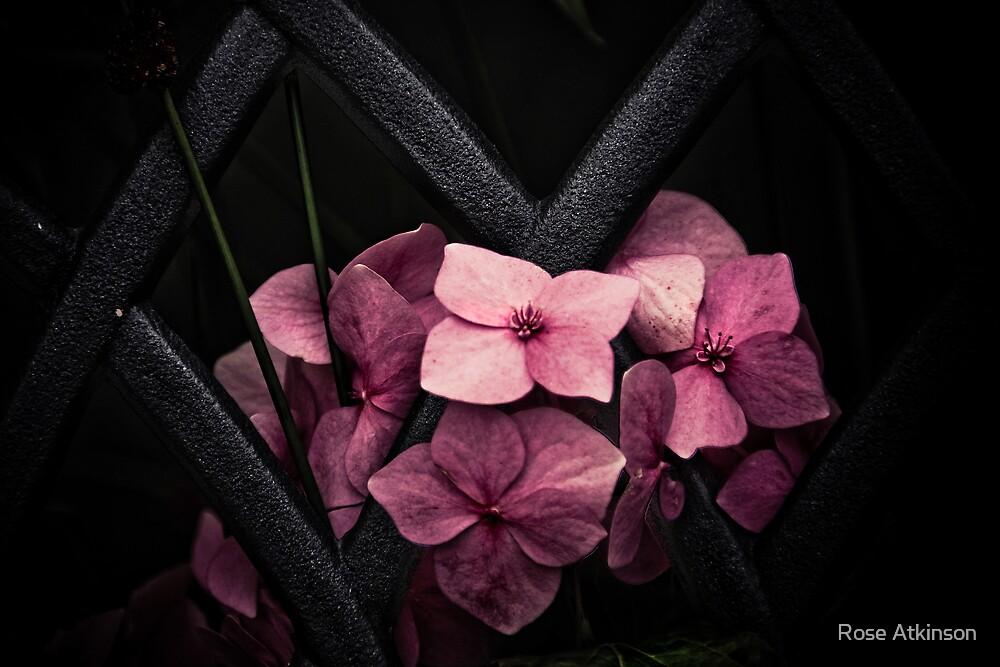 Pink lattice 2 by Rose Atkinson