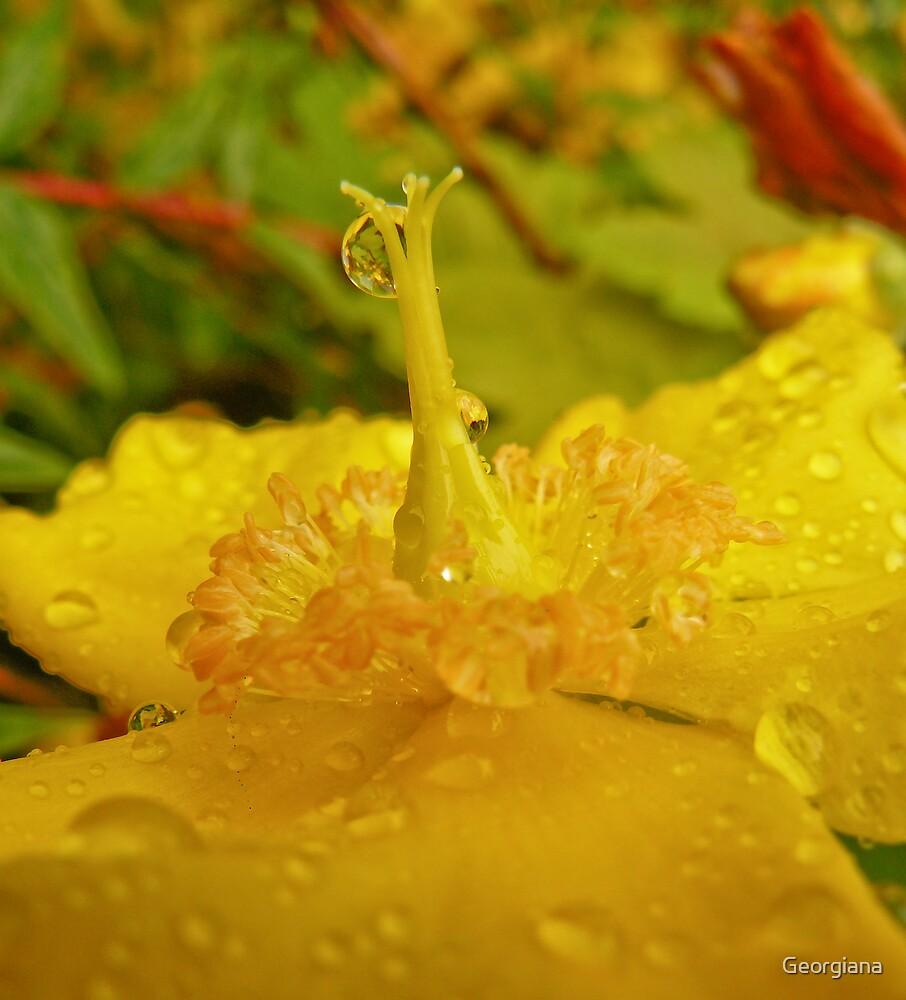 Rain Drop by Georgiana