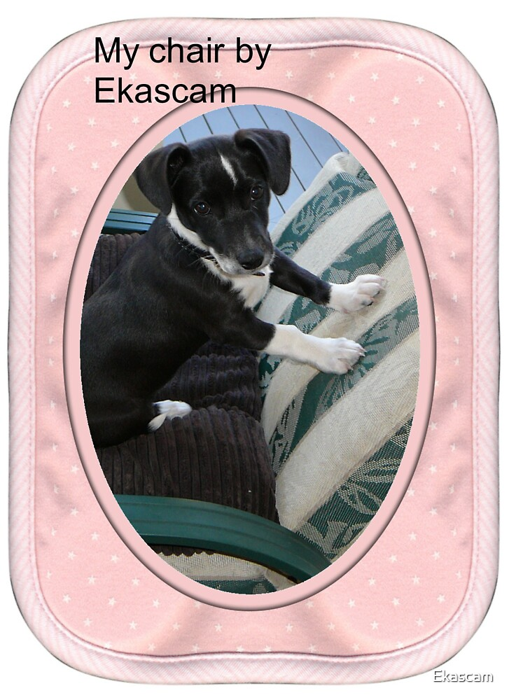 FEELING RIGHT AT HOME ........ TURNIG 12 WEEKS OF AGE by Ekascam