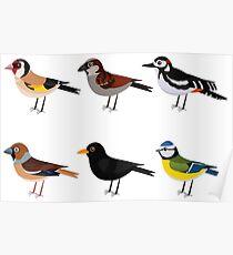 Illlustration set of cute European bird cartoons Poster