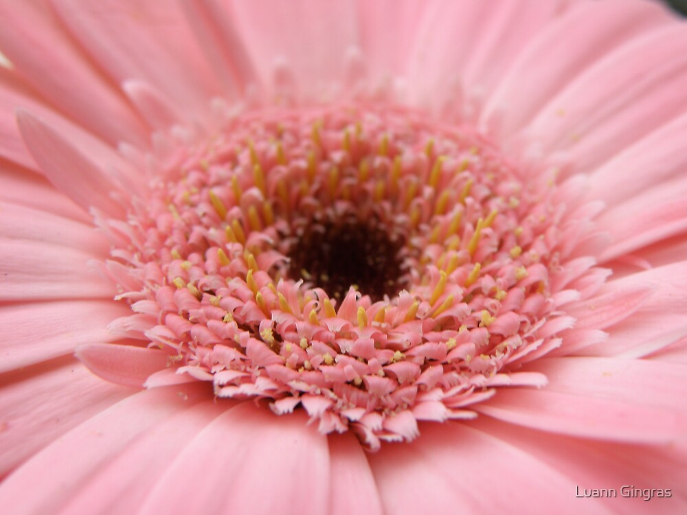 Pink by Luann Gingras