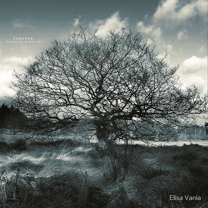 Forever by Elisa Vania