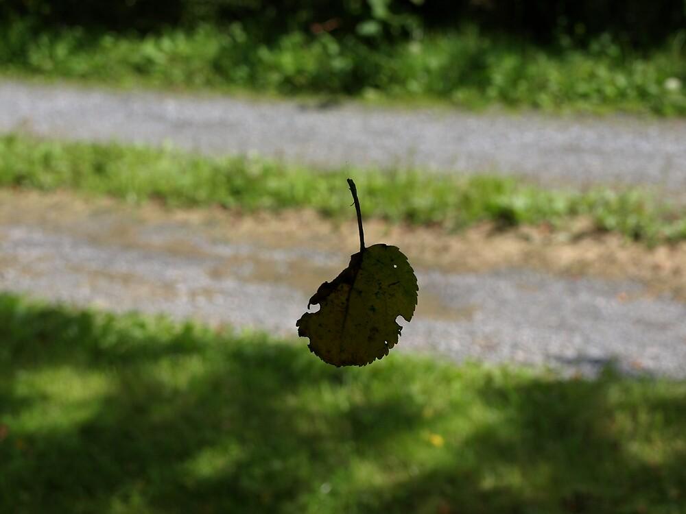 falling leaf by Jason LeRue