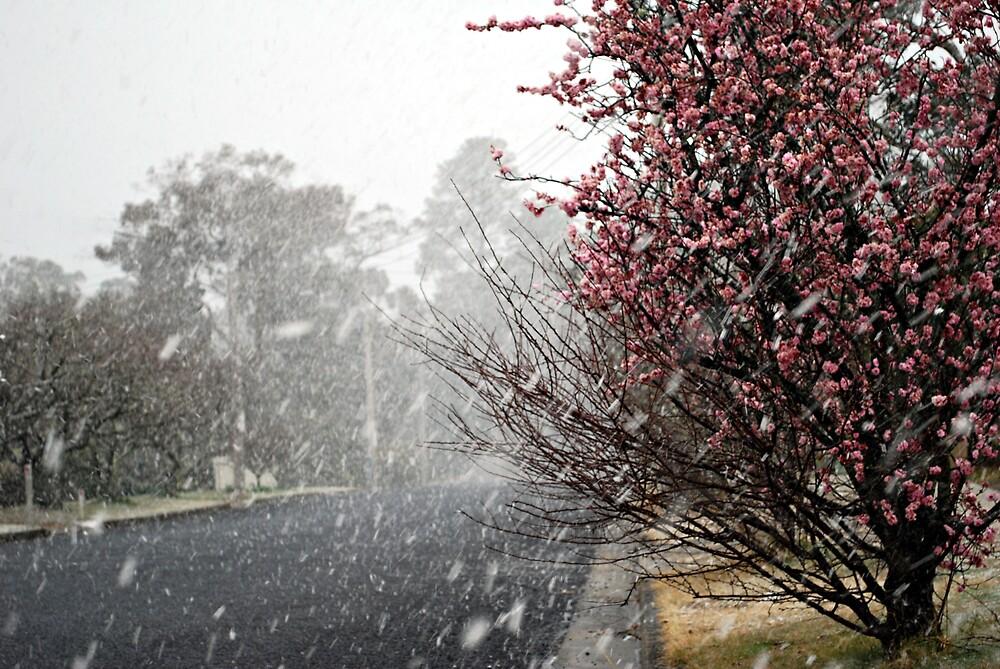 Leura Snow by Peta Jade
