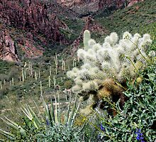 Peralta Canyon by Sue  Cullumber