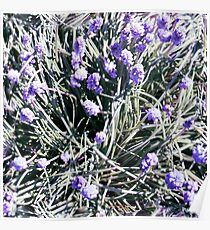 Violet Heather Flowers Photographic Pattern Poster