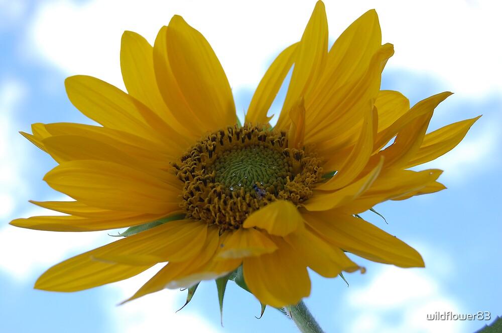 Pretty sunflower by wildflower83