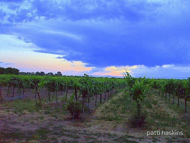 Vina Vineyard by patti haskins
