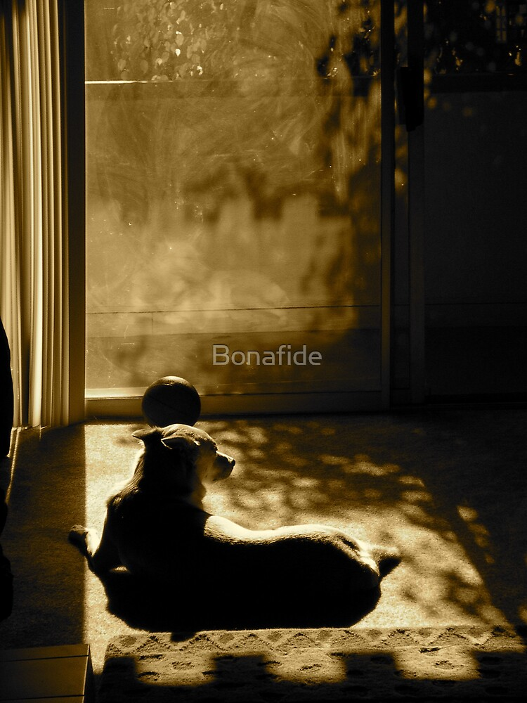 Sun Daze by Bonafide