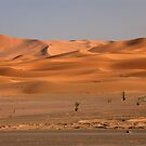 Sahara by Peter Hammer