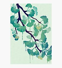 O Ginkgo (in Green) Photographic Print