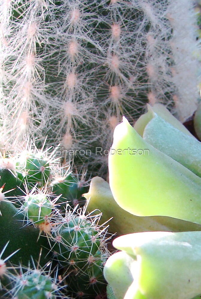 Cactus vs Succulant by Sharon Robertson