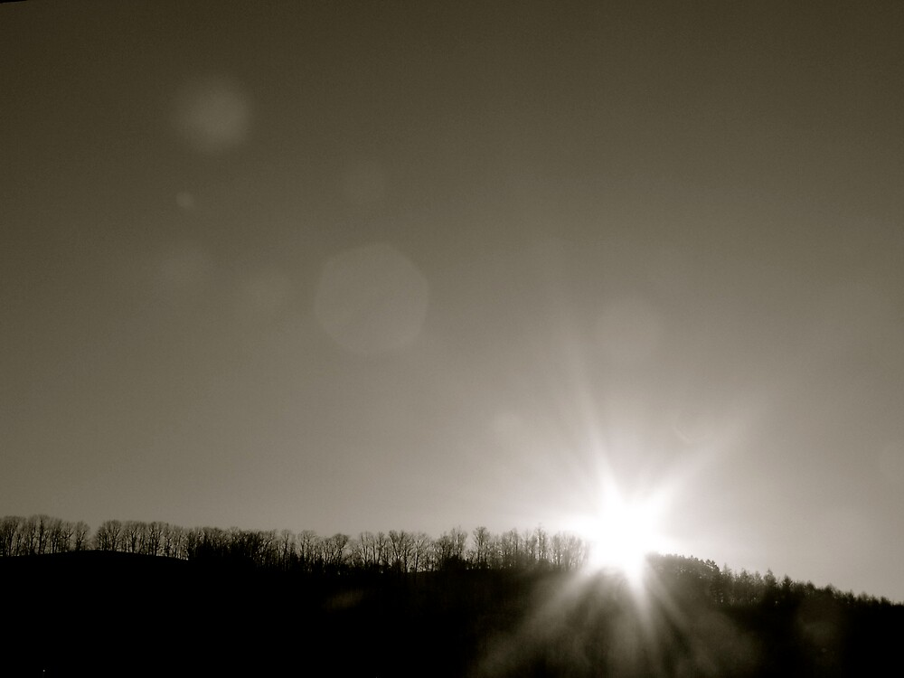 Sun behind trees by melb100