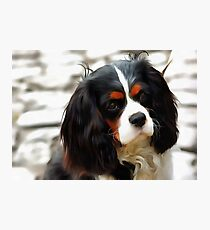 Portrait Of A King Charles Cavalier Spaniel Photographic Print