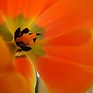 Flower Guts by Charlotta